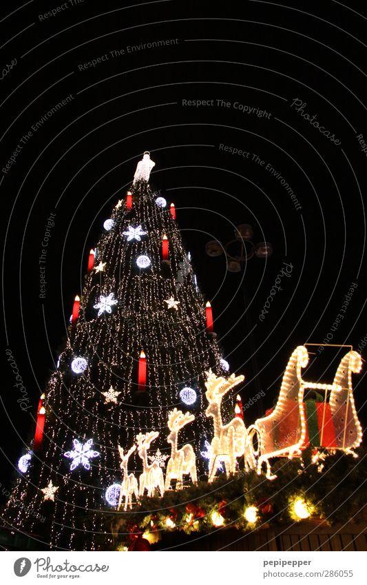 ^--P Tourismus Winter Feste & Feiern Weihnachten & Advent Himmel Stern Baum Stadt Stadtrand Altstadt Sehenswürdigkeit Luftverkehr Nutztier 4 Tier Rudel Kerze