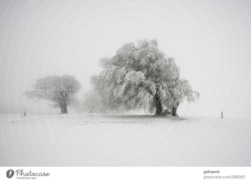 Wintermärchen Natur weiß Baum Landschaft Ferne Umwelt kalt Schnee Horizont Schneefall Wetter außergewöhnlich Feld geschlossen Nebel