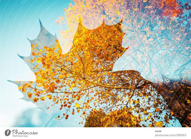 Soulstorm Natur blau Pflanze Baum rot Blatt gelb Umwelt Herbst Wetter außergewöhnlich Schönes Wetter ästhetisch Vergänglichkeit Kreativität Jahreszeiten