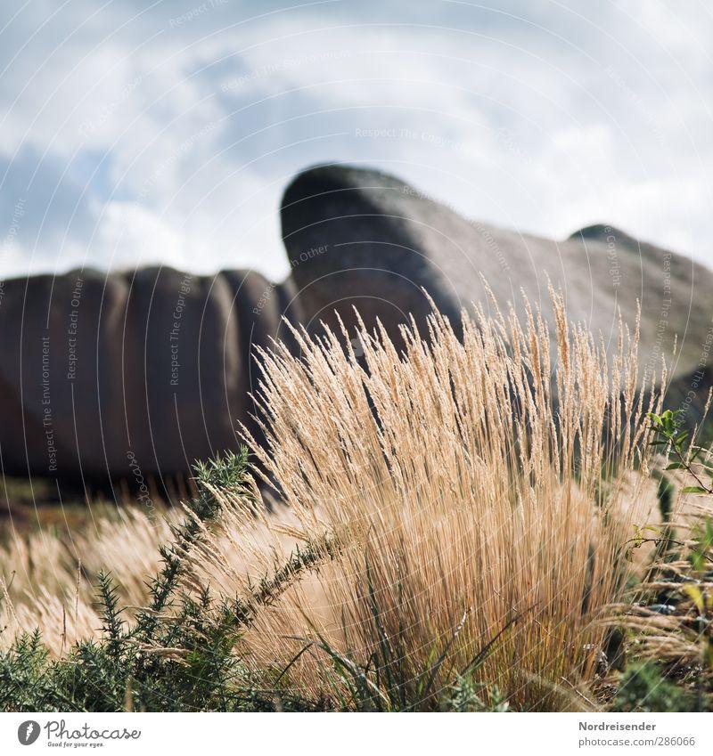 Bretagne Natur Ferien & Urlaub & Reisen Sommer Pflanze Einsamkeit Wolken ruhig Landschaft Erholung Gras Felsen Stimmung Tourismus Schönes Wetter Urelemente Hügel