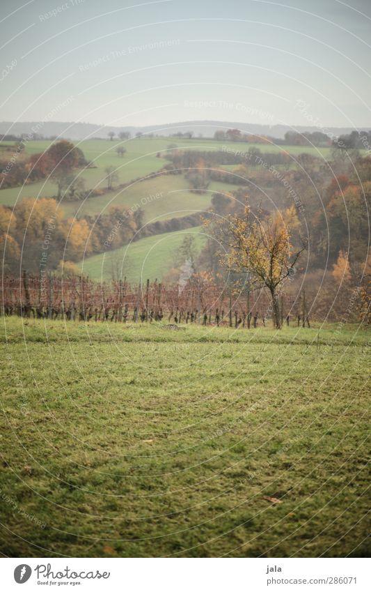 wiesen, wälder & felder Umwelt Natur Landschaft Pflanze Himmel Herbst Baum Gras Sträucher Grünpflanze Nutzpflanze Wildpflanze Wiese Feld Wald Hügel natürlich