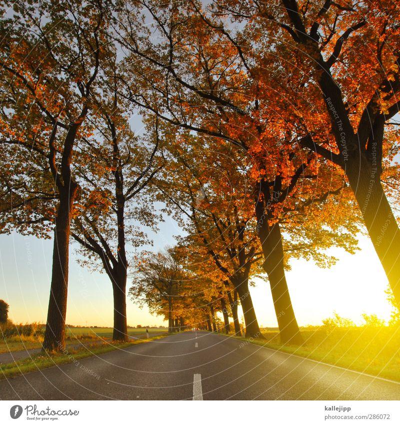 roadmovie Umwelt Natur Landschaft Klima Baum Feld Verkehr Verkehrswege Autofahren Straße Wege & Pfade Zukunft Landstraße Mittelstreifen herbstlich Allee