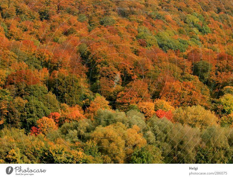Herbstfarben... Natur grün Pflanze Baum rot Landschaft Wald gelb Umwelt Berge u. Gebirge Stimmung braun natürlich authentisch Wachstum
