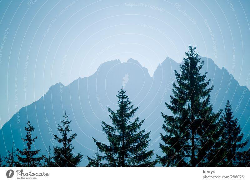 Blaue Berge in Tirol Natur blau Baum Berge u. Gebirge außergewöhnlich hoch elegant leuchten Idylle ästhetisch Macht Alpen Romantik Tanne Baumkrone Wolkenloser Himmel