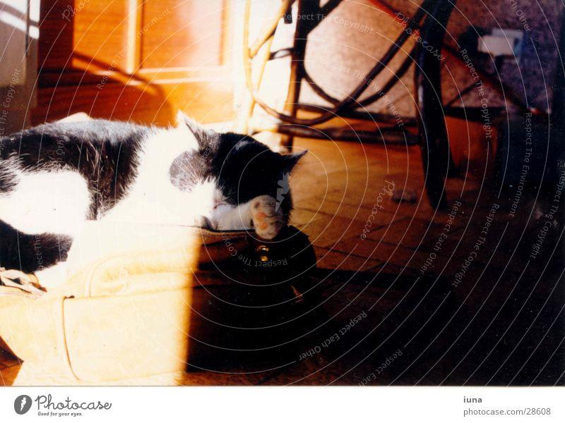 Der Ellbogenschläfer weiß Sonne träumen Katze Wärme hell schlafen Physik Müdigkeit Frankreich gemütlich Schnurren