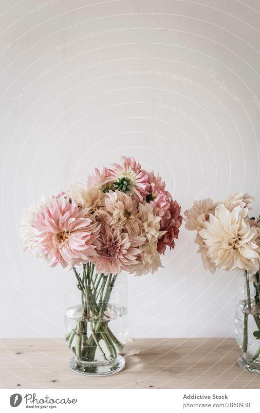 Blumensträuße in Vasen auf dem Tisch Haufen Küchengeräte Blumenstrauß Wasser Wand weiß Holz Grunge Glas frisch retro Pflanze Innenarchitektur Blütenknospen