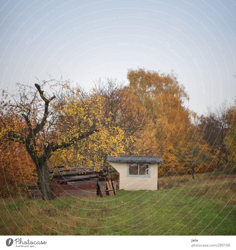 laube Umwelt Natur Landschaft Pflanze Himmel Herbst Baum Gras Sträucher Grünpflanze Wildpflanze Garten Wiese Hütte natürlich blau grün orange Farbfoto