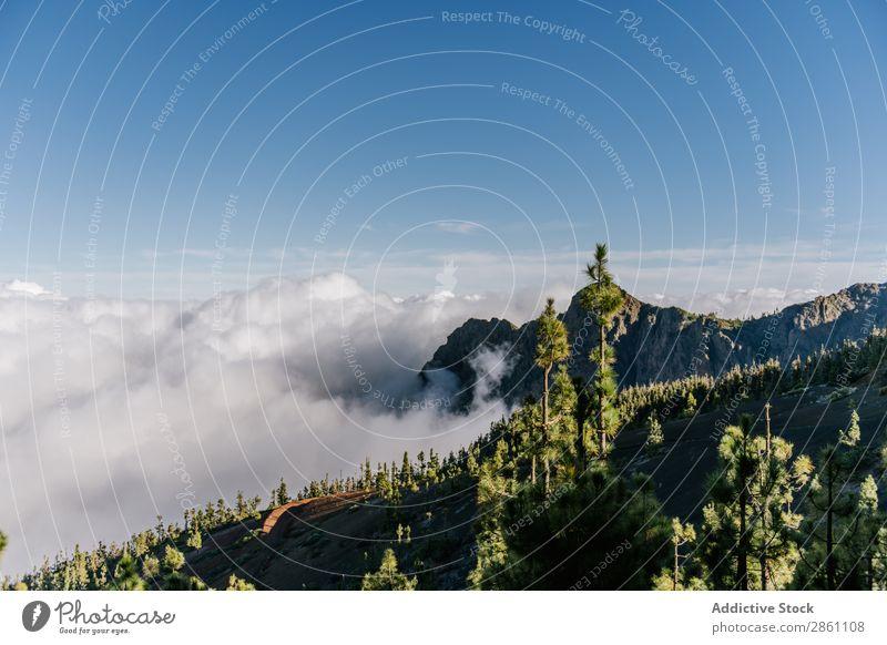 Waldbedeckte Hügel an sonnigen Tagen Natur Ferien & Urlaub & Reisen Tourismus Berge u. Gebirge Landschaft wandern alpin Wolkenlandschaft Fluggerät