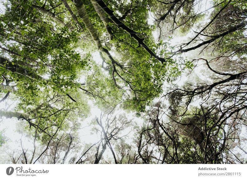 Grüne Baumkronen im Wald Holz Himmel Sonne Höhe Natur erstaunlich Aussicht Pflanze Park schön Sonnenlicht pflanzlich Blatt Wachstum Ast Garten Landschaft frisch