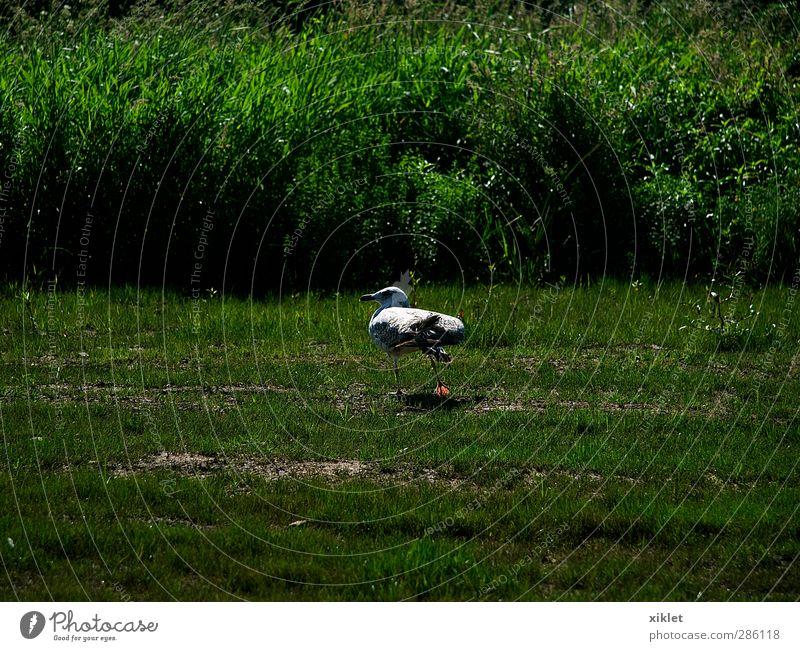 Wasser grün weiß Freude Tier ruhig Bewegung grau Traurigkeit Luft Vogel gehen Feld wild hoch Fröhlichkeit
