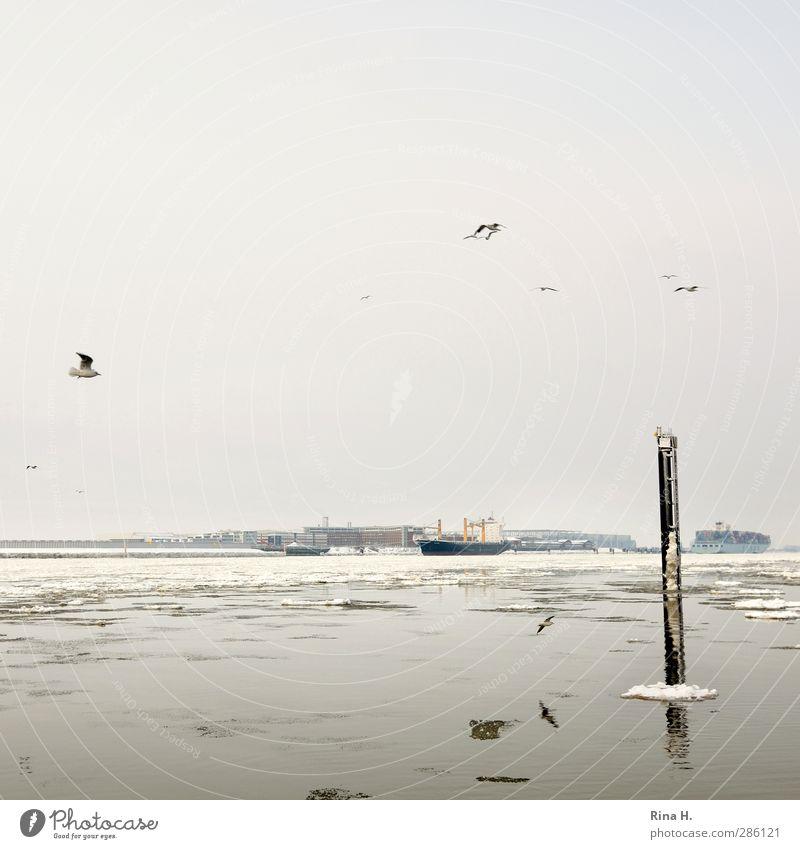 Eis auf der Elbe Wirtschaft Natur Winter Frost Schnee Fluss Hamburg Schifffahrt Containerschiff Frachter Vogel Möwe fliegen authentisch Handel Eisscholle