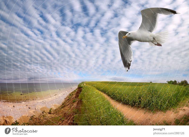 Nord See Küste. Umwelt Natur Landschaft Urelemente Erde Luft Wasser Himmel Wolken Horizont Sonne Frühling Sommer Klima Wetter Schönes Wetter Wind Hügel Wellen
