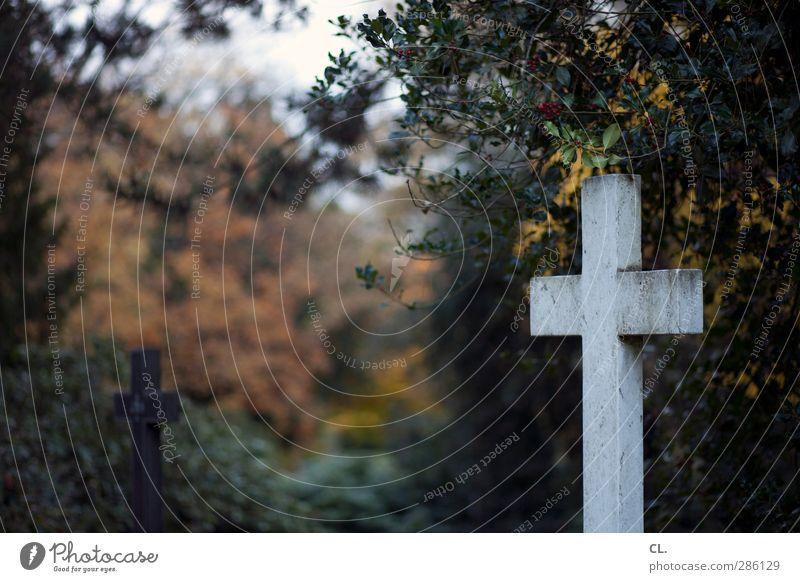 kreuze Natur Pflanze Baum Landschaft dunkel kalt Herbst Tod Traurigkeit Religion & Glaube Sträucher Vergänglichkeit Trauer Unendlichkeit Christliches Kreuz