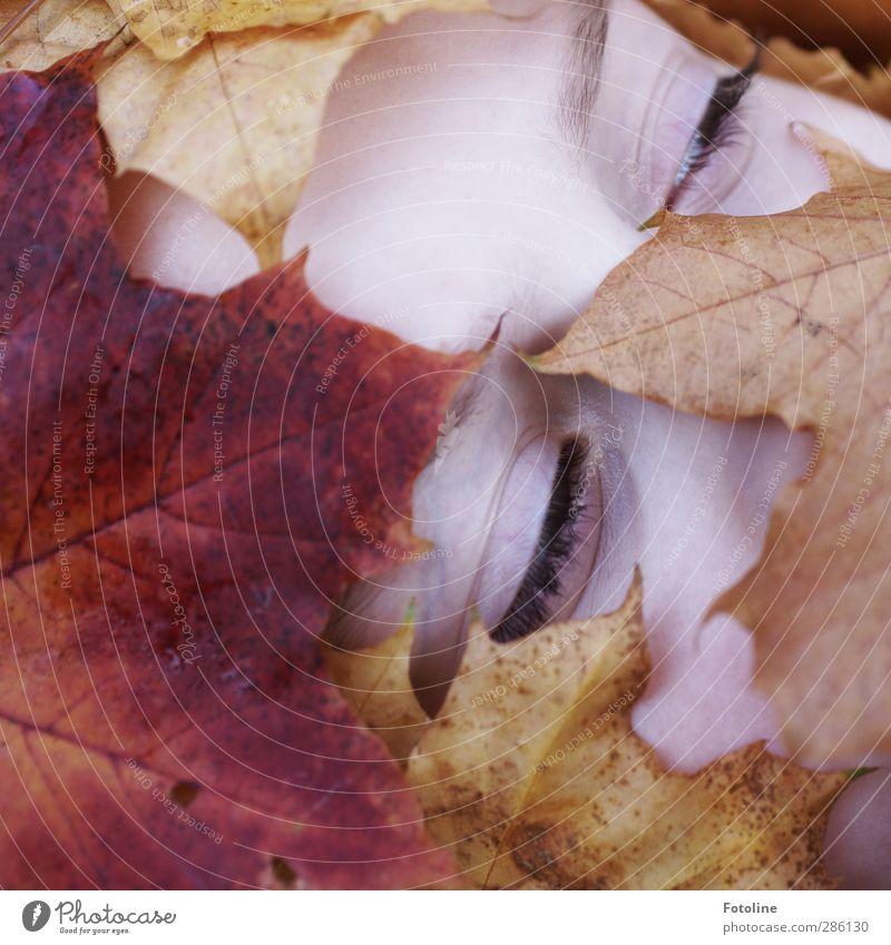 Erwachen Mensch feminin Kind Mädchen Haut Kopf Gesicht Auge Umwelt Natur Pflanze Herbst Blatt hell nah natürlich braun gelb rot Wimpern Augenbraue Zwinkern