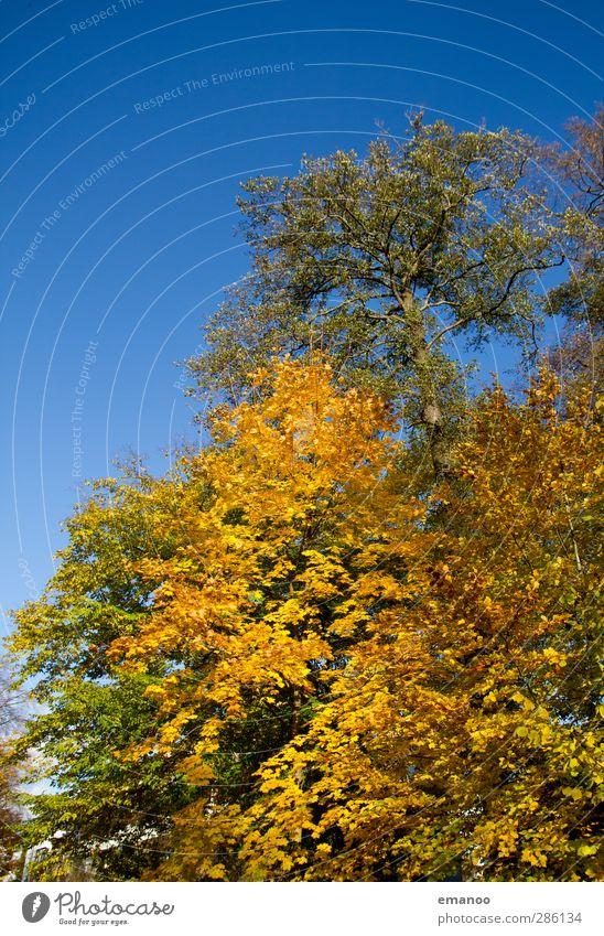 still fall Umwelt Natur Landschaft Pflanze Himmel Sonne Herbst Klima Wetter Baum Park Wald Wachstum natürlich schön blau gelb grün Blatt Laubbaum Ast Herbstlaub