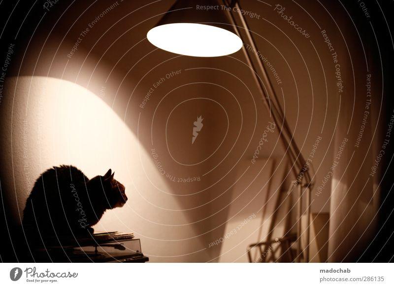 Catman - Dark Knight chills Katze Tier ruhig Stil Stimmung Wohnung Zufriedenheit elegant Energie Häusliches Leben Lifestyle Idylle ästhetisch planen Coolness