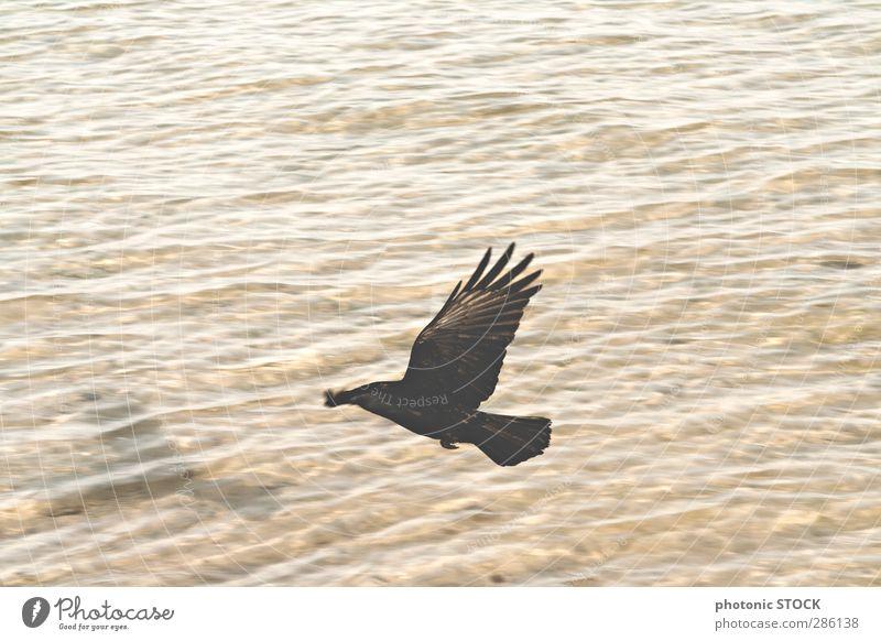 Vogel. Schatten. Wasser Natur Meer Tier schwarz Erholung gelb Ferne Wärme Freiheit Stimmung braun fliegen Wellen Kraft