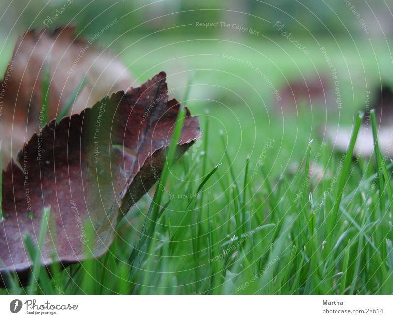 Herbstblatt Blatt Gras Wiese Halm Rasen Stimmung