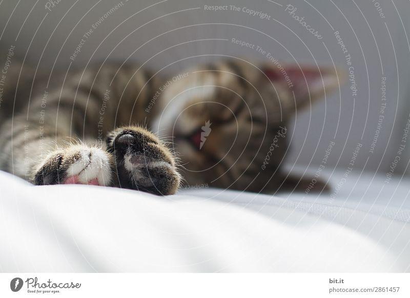 Heute ist Schlafwetter Krankheit Wohlgefühl Zufriedenheit Sinnesorgane Erholung ruhig Tier Haustier Katze Tierjunges genießen liegen schlafen klein braun Glück