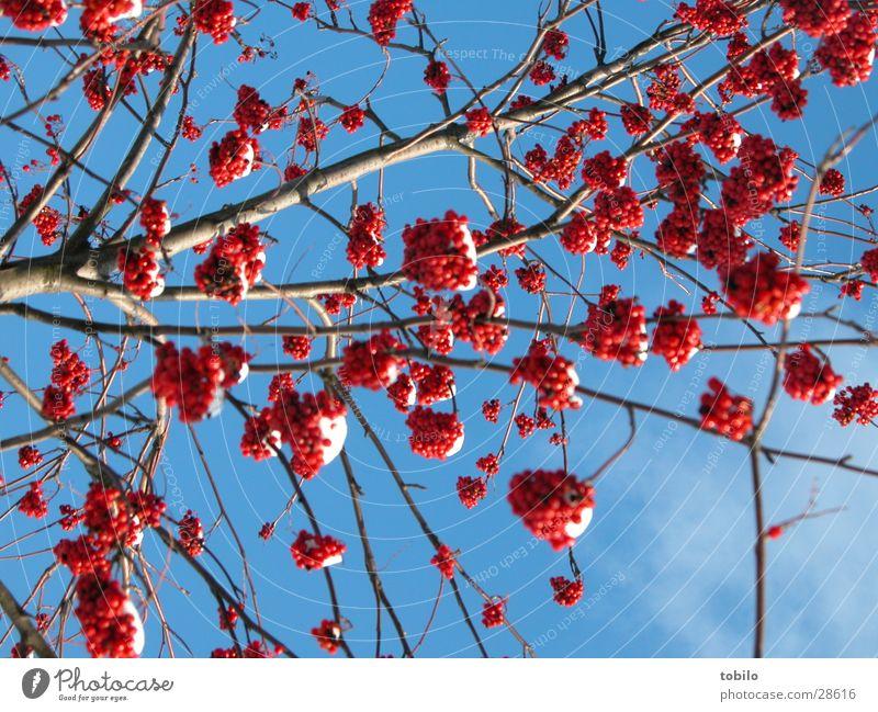 Strauch Natur Himmel blau Wolken Gefühle Frühling Sträucher