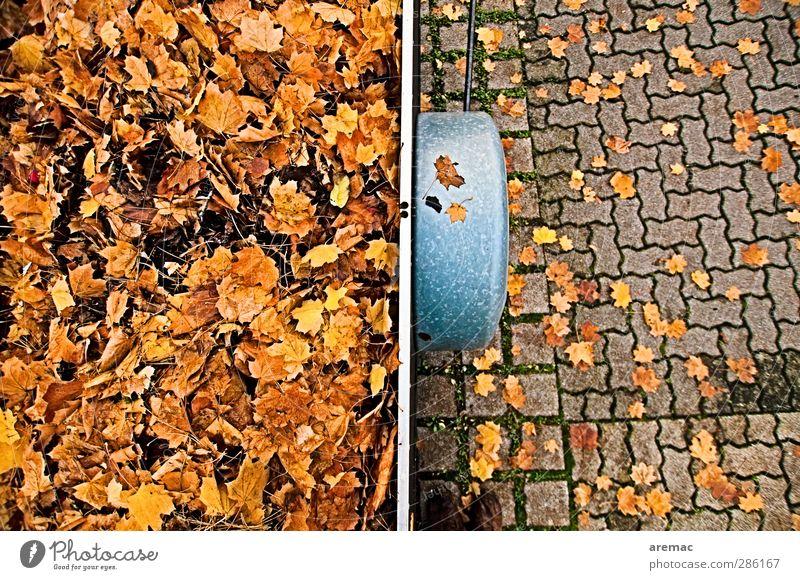 Herbst Pflanze Blatt Verkehrsmittel Straße Anhänger gelb gold Parkplatz ansammeln Güterverkehr & Logistik Reinigen Farbfoto mehrfarbig Außenaufnahme