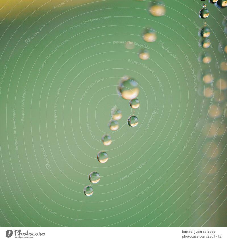 Tropfen auf das Spinnennetz Internet Tennisnetz Natur Regen hell glänzend Außenaufnahme abstrakt Konsistenz Hintergrund Wasser sehr wenige grün