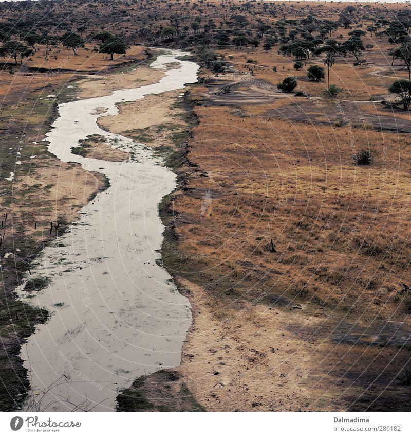 Tarangire River Ferien & Urlaub & Reisen Abenteuer Safari Camping Umwelt Natur Landschaft Pflanze Tier Erde Wasser Sommer Herbst Klima Sträucher Flussufer