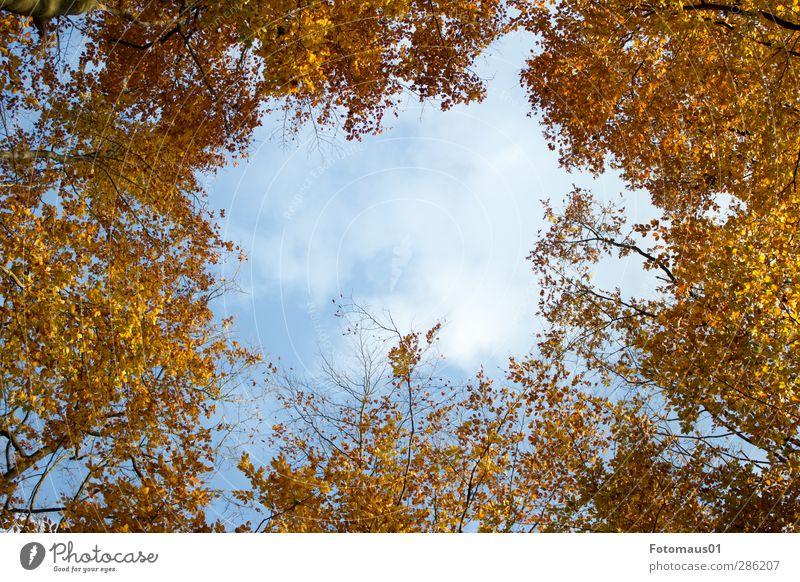 Durchblick Natur Himmel Wolken Herbst Schönes Wetter Baum blau braun gelb gold orange weiß Farbfoto Außenaufnahme Textfreiraum Mitte Tag Sonnenlicht
