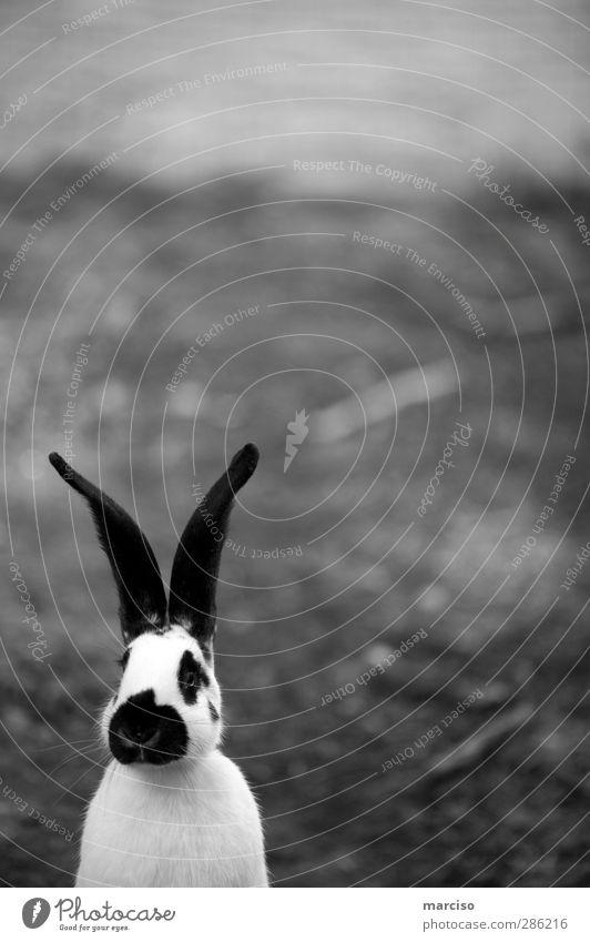 Osterhase Tier Haustier Nutztier Tiergesicht Streichelzoo Hase & Kaninchen Ostern Osternest 1 niedlich Sympathie Tierliebe Freizeit & Hobby Freude Kindheit