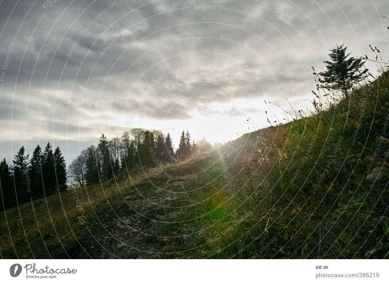 Licht! Natur grün Baum Einsamkeit Wolken ruhig Landschaft Wald dunkel Wiese Berge u. Gebirge kalt Herbst grau Wetter wandern