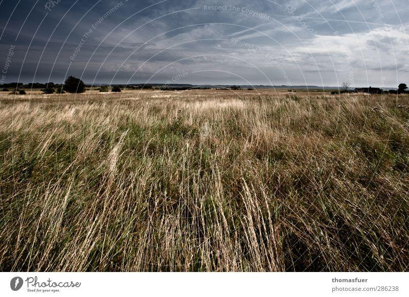 Nordwind Himmel Natur blau Ferien & Urlaub & Reisen Sommer Baum Meer Strand Wolken Landschaft gelb Ferne Wärme Wiese Gras Küste