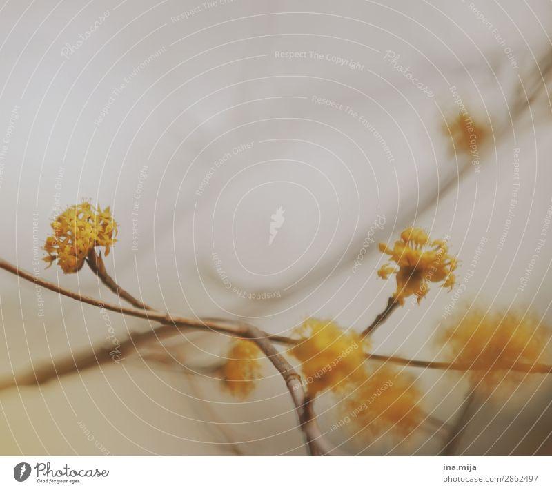 _ Natur Sommer Pflanze Farbe Baum Einsamkeit Herbst Religion & Glaube gelb Umwelt Blüte Frühling Traurigkeit Garten Stimmung Zufriedenheit