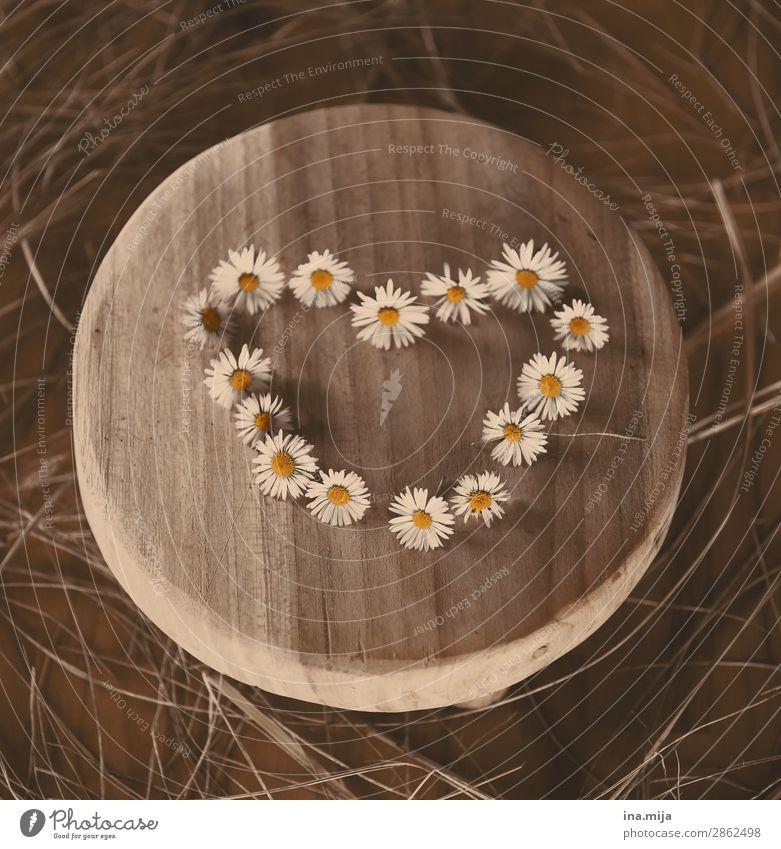 <3 Umwelt Natur Frühling Sommer Herbst Pflanze Blume Blüte Wildpflanze Gänseblümchen Kitsch Krimskrams Holz Herz Vertrauen Sympathie Freundschaft Zusammensein