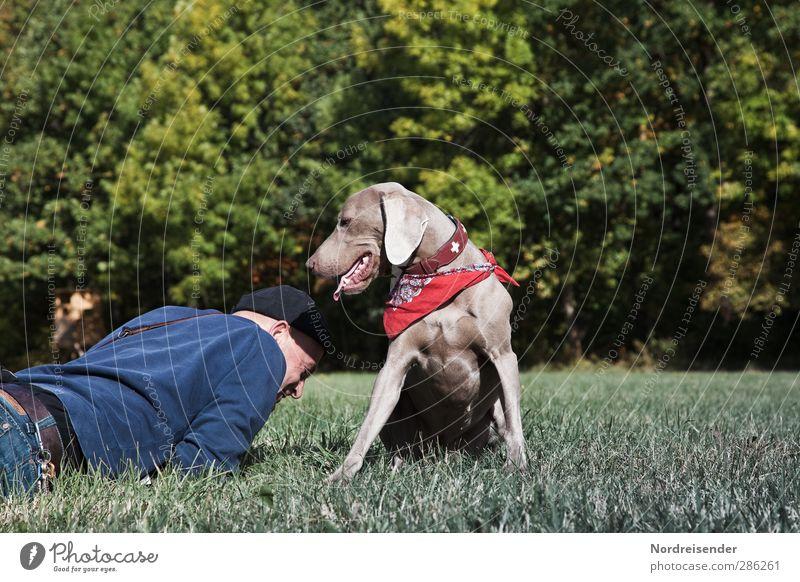 Los....hoch jetzt Lifestyle Freude Leben Wohlgefühl Erholung Mensch Mann Erwachsene 1 45-60 Jahre Schönes Wetter Wiese Wald Tier Hund beobachten genießen liegen