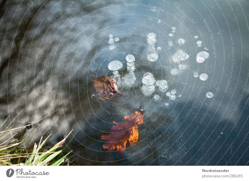 Gefangen Natur Pflanze Wasser Herbst Winter Eis Frost Gras Teich See frieren blau mehrfarbig unbeständig Klima rein ruhig Sinnesorgane stagnierend Zeit