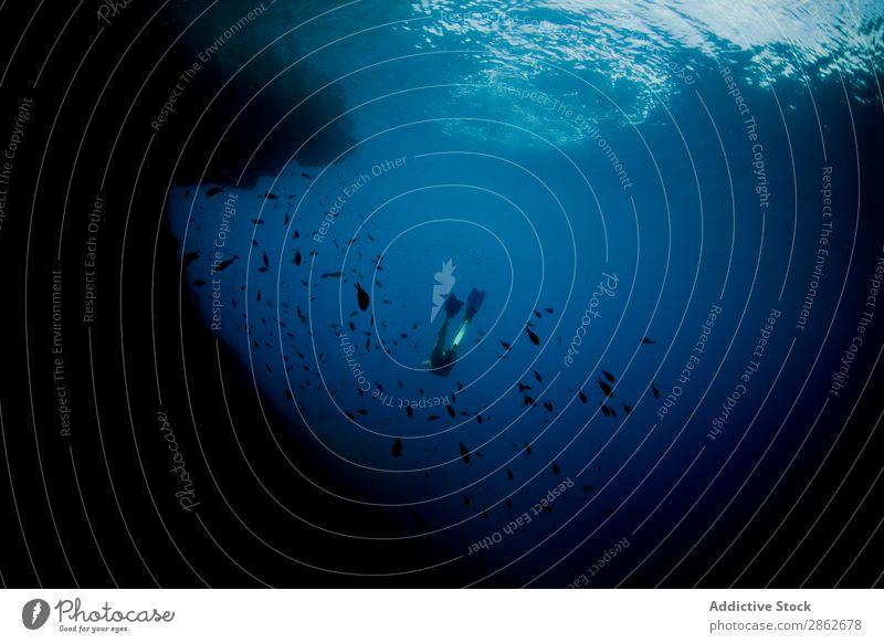 Taucher beim Schwimmen im Schwarm Fisch seicht Unterwasseraufnahme Wasser Meer blau Tierwelt marin Korallen Riff aquatisch Natur tropisch wild Tauchgerät Umwelt