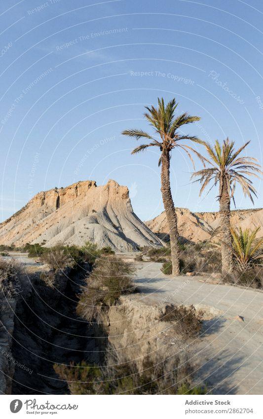 Palmen wachsen an der Düne Handfläche Tourismus Baum Ferien & Urlaub & Reisen Sand Natur Landschaft schön Wüste regenarm Sonnenstrahlen Strand Abenteuer Küste