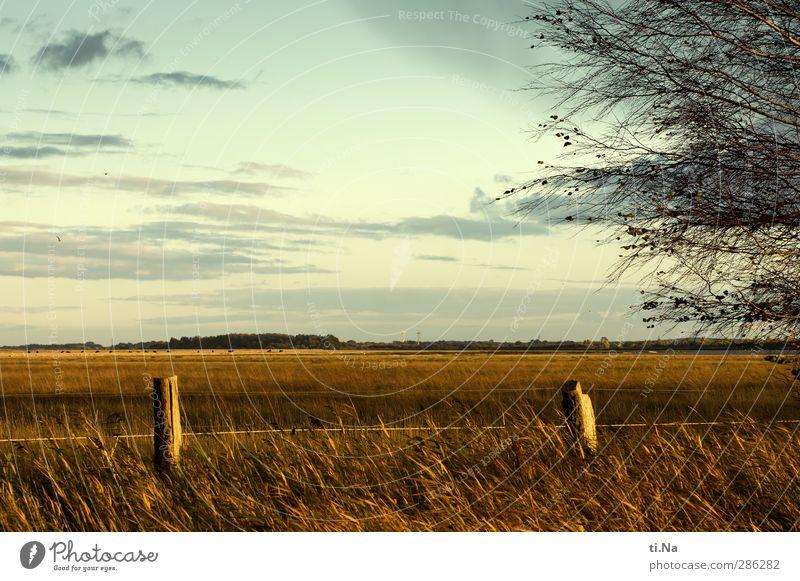 plattes Land - weites Land Himmel Natur weiß Baum Wolken Landschaft gelb Umwelt Herbst Gras grau Sträucher türkis Nordseeküste Dithmarschen