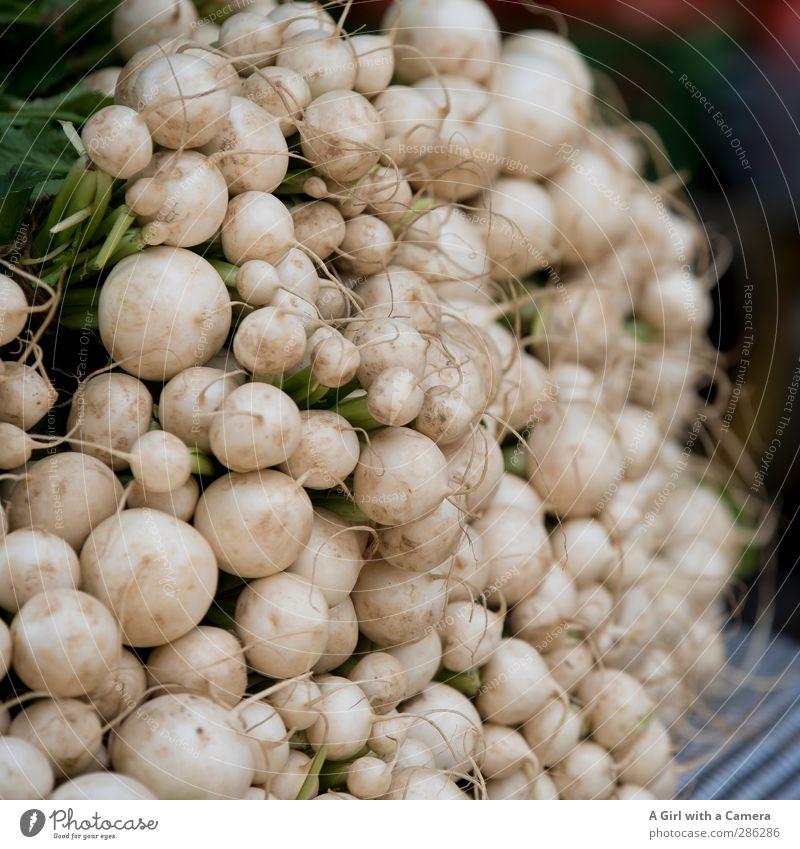 Ernte Dank Gesundheit Lebensmittel frisch viele rund Scharfer Geschmack Gemüse Bioprodukte Diät Vegetarische Ernährung Bündel Radieschen