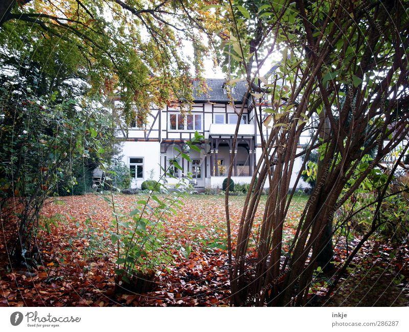 der geheime Garten II Häusliches Leben Wohnung Haus Fachwerkhaus Herbst Baum Gras Sträucher Blatt Wiese Menschenleer Traumhaus Architektur Villa Fachwerkfassade