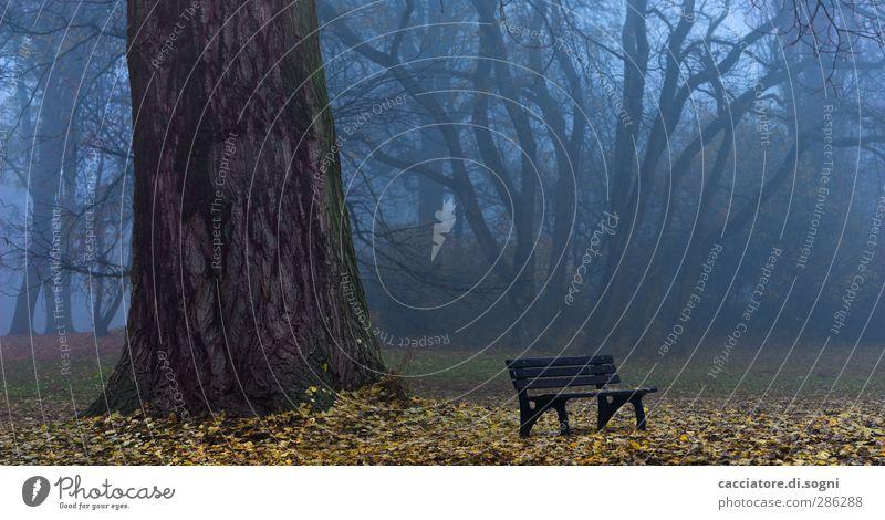 a good place for ghost hunting Landschaft Herbst Nebel Baum Park Parkbank außergewöhnlich bedrohlich dunkel gruselig trist blau braun demütig Traurigkeit Trauer