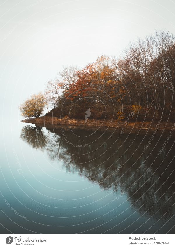 Ruhiges Wasser des Sees im Nebel Herbst Wald Baum friedlich abgelegen Stille Licht Stimmung stumm ruhig Stillleben geheimnisvoll Landschaft Außenaufnahme Blatt