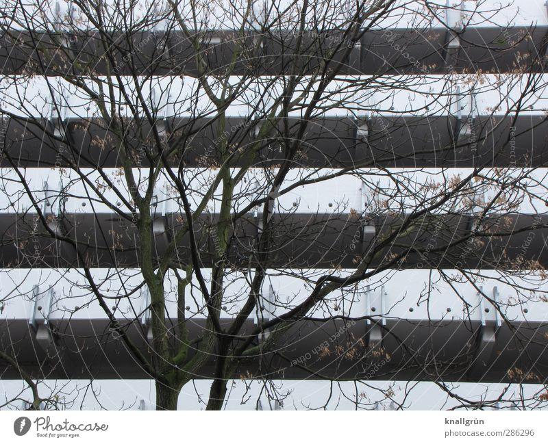 Großstadtpflanze Umwelt Pflanze Winter Baum Haus Parkhaus Mauer Wand Fassade Stadt braun weiß Gefühle Stimmung Natur Geäst kahl trist Ast November