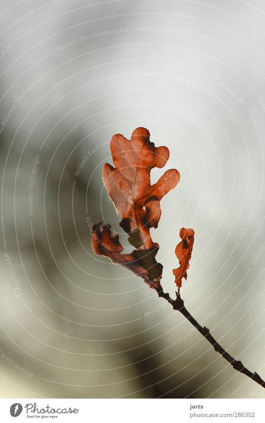 finale Natur Pflanze Baum Blatt ruhig Wald Umwelt Herbst Hoffnung Gelassenheit Abschied