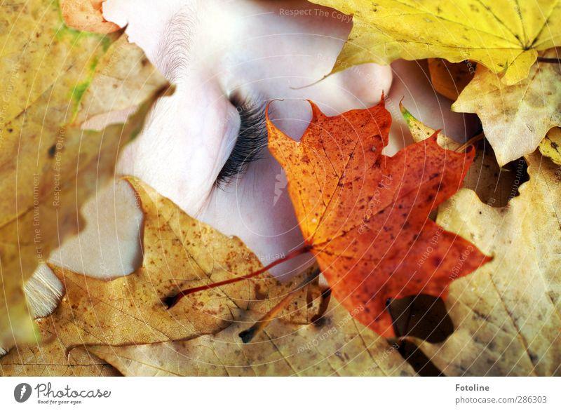 Herbstschlaf II Mensch feminin Kind Mädchen Kindheit Haut Kopf Gesicht Auge Nase Umwelt Natur Pflanze Schönes Wetter Blatt hell nah natürlich Wimpern Augenbraue