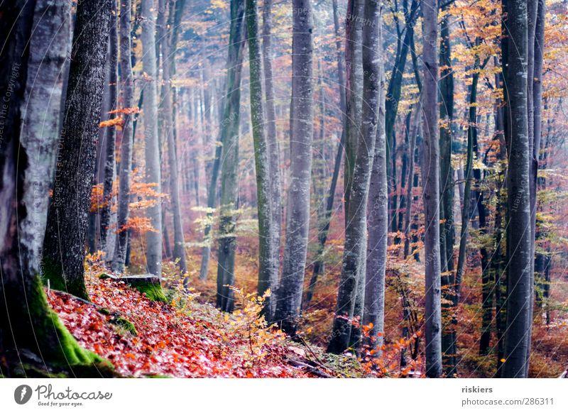 buchenwald Natur ruhig Wald Umwelt Herbst Stimmung Idylle