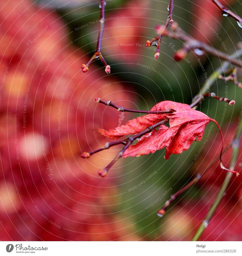 dran bleiben... Natur alt grün Pflanze Baum rot Blatt ruhig Umwelt Herbst Garten Stimmung braun natürlich authentisch ästhetisch