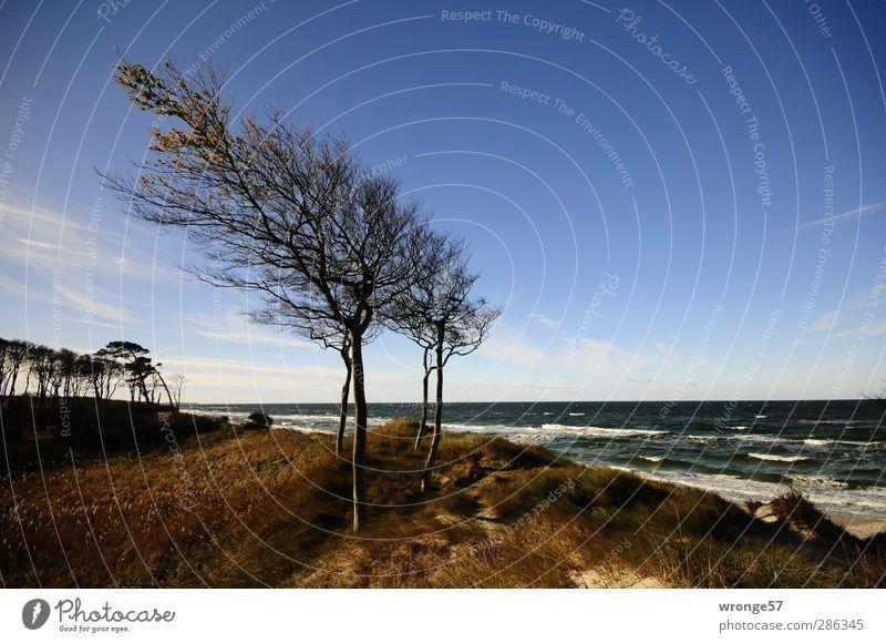 Windharfen Ferien & Urlaub & Reisen Tourismus Ausflug Strand Meer Wellen Natur Landschaft Himmel Horizont Herbst Schönes Wetter Baum Küste Ostsee Insel