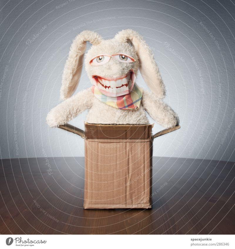 Überraschung (Part II) Tier Fell 1 Verpackung Paket entdecken Lächeln lachen außergewöhnlich Fröhlichkeit Glück kuschlig trashig verrückt braun weiß Karton
