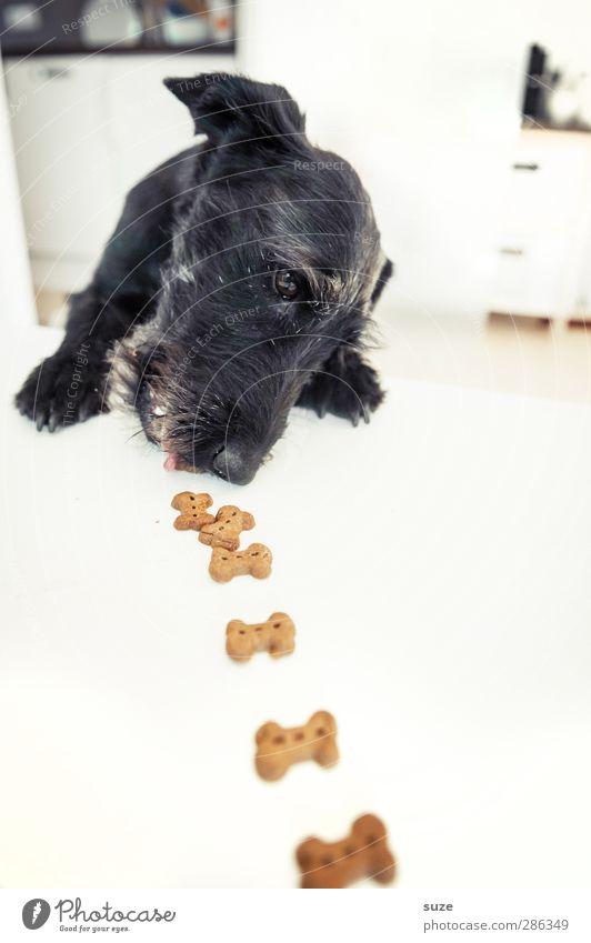 Rolf Minkowsky zu Tisch Hund weiß Tier schwarz lustig hell außergewöhnlich niedlich Kreativität Idee Fell Appetit & Hunger Tiergesicht Haustier Fressen